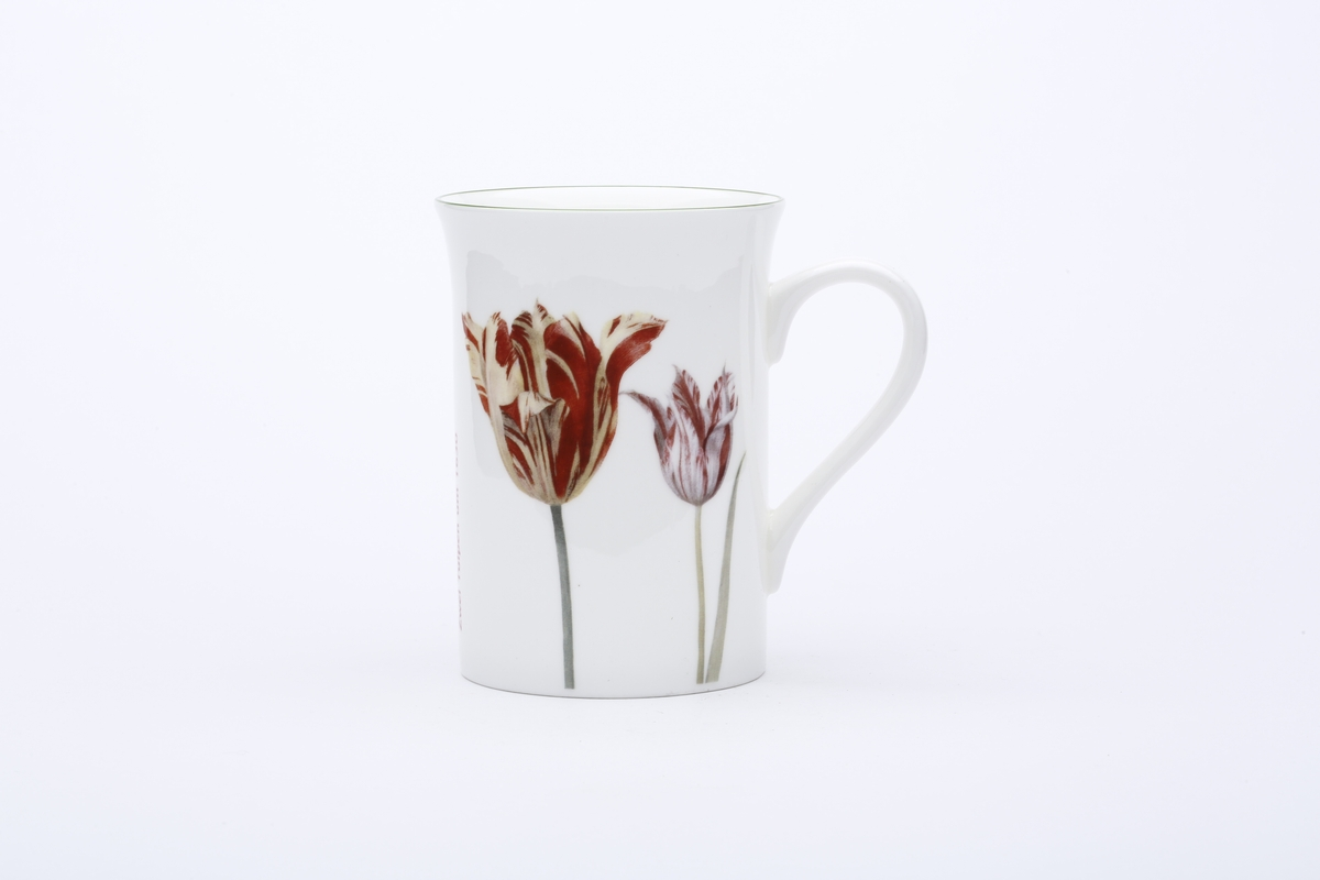 Cup Flegel, Two Tulips