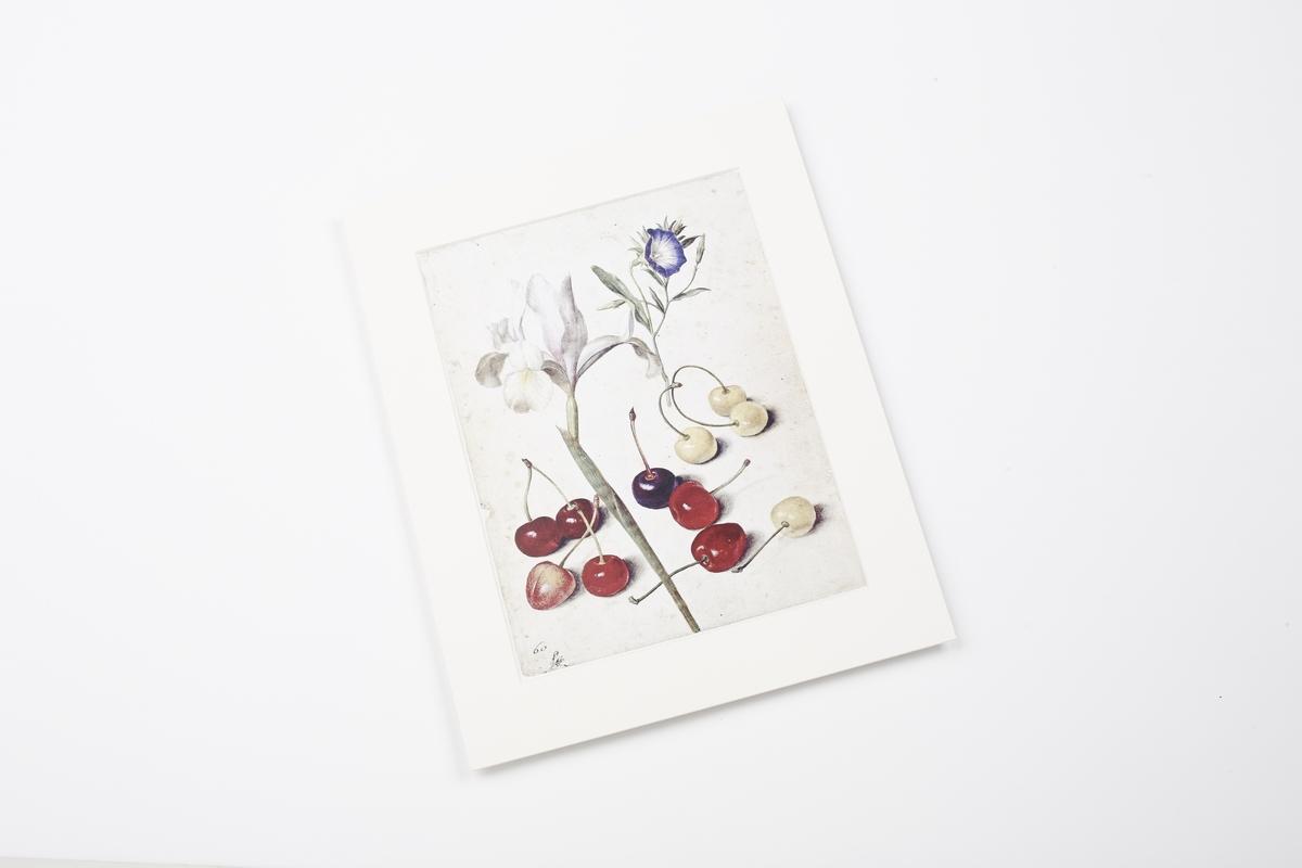 Miniprint in Passepartout: Flegel, Spanische Schwertlilie