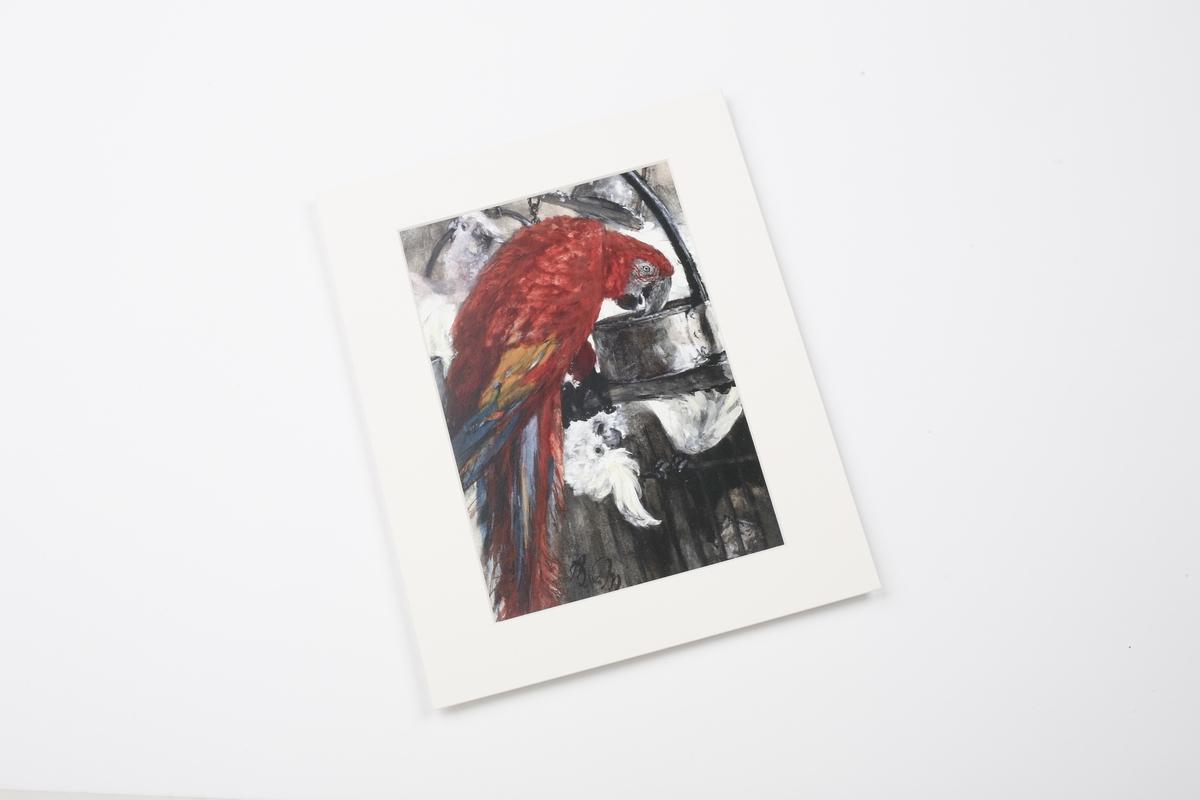 Miniprint in Passepartout: Menzel, Roter Ara