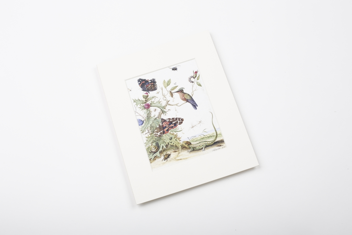 Miniprint in Passepartout: Quina der Jüngere, Insekten