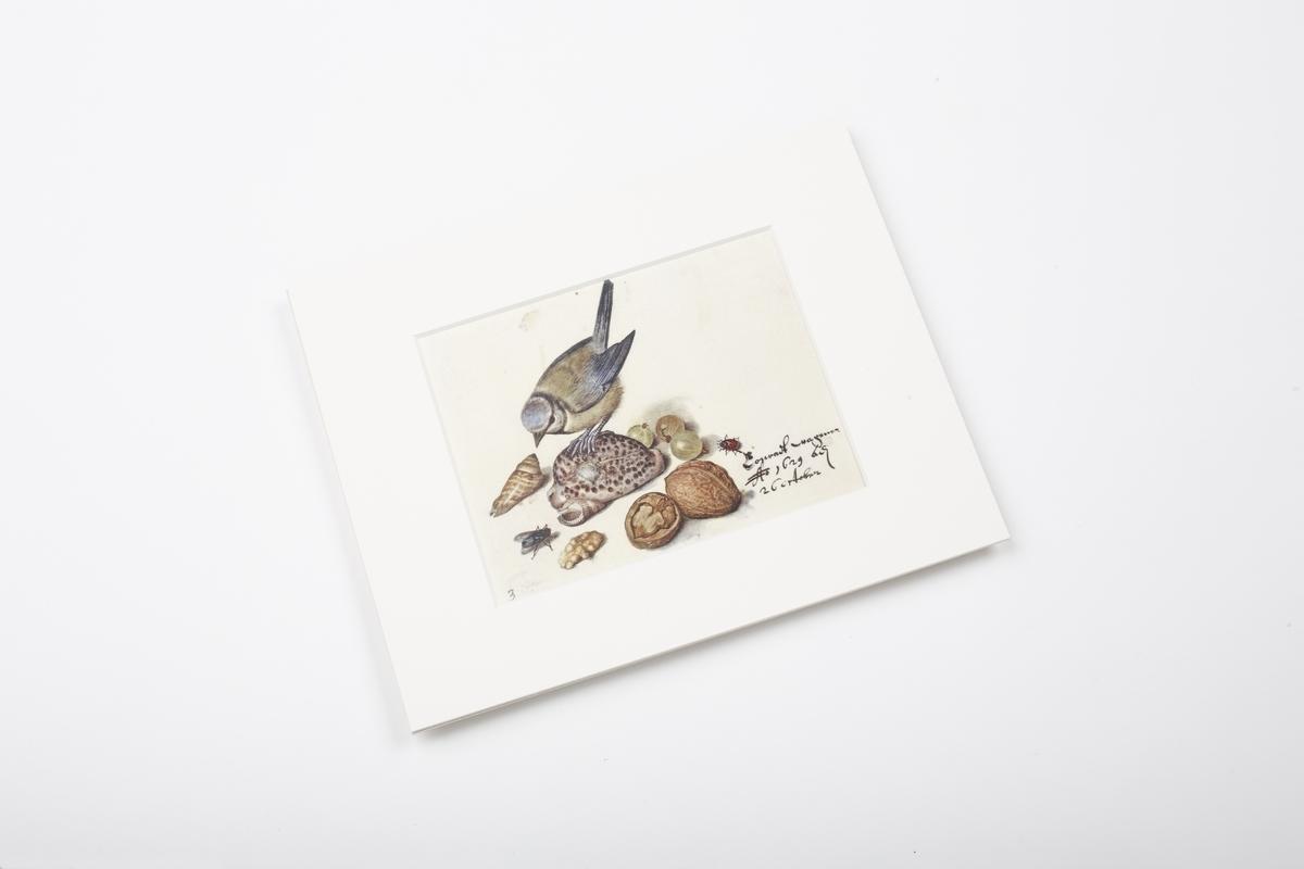 Miniprint in Passepartout: Flegel, Stilleben mit Blaumeise