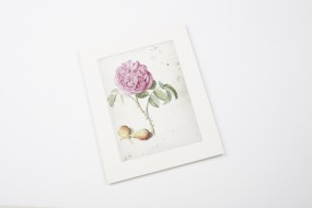 Miniprint in Passepartout: Flegel, Batavische Rose